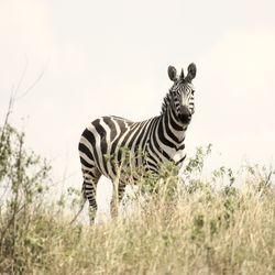 Big_huwelijksreis_333travel_zebra