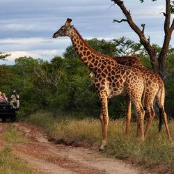 Big_huwelijksreis_333travel_zuid-afrika-krugerpark