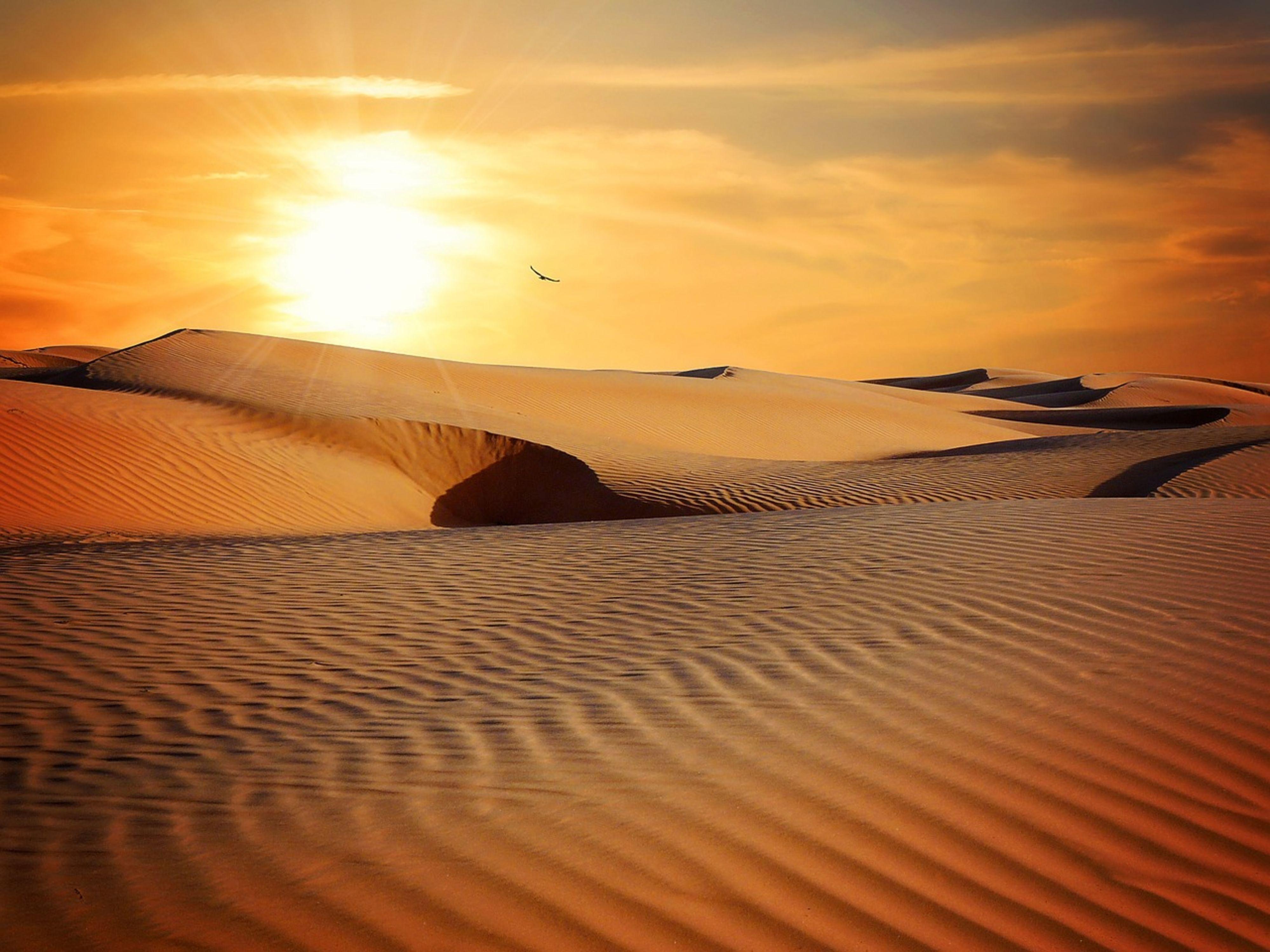 Wereldreis Woestijn
