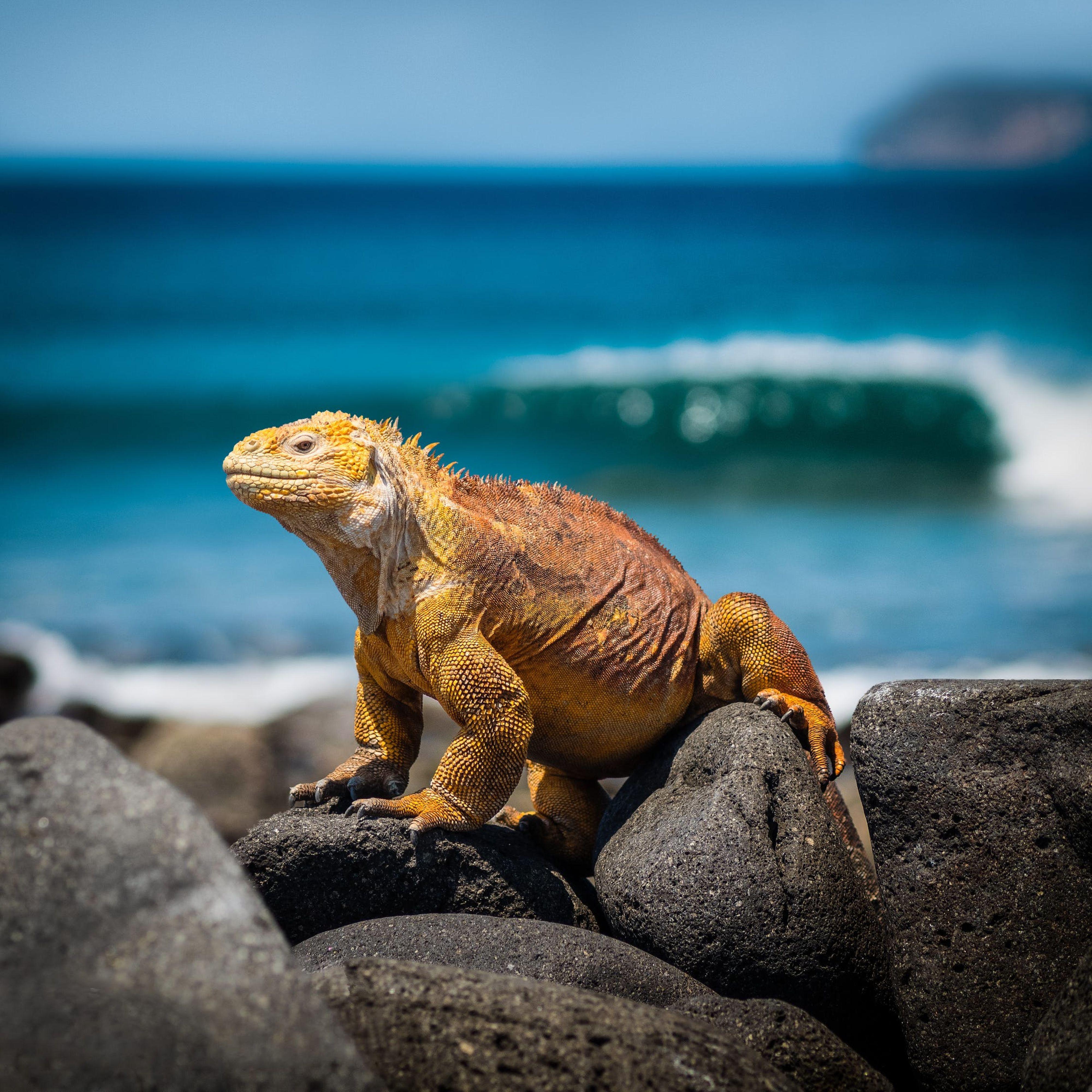 Huwelijksreis naar Galapagos Eilanden