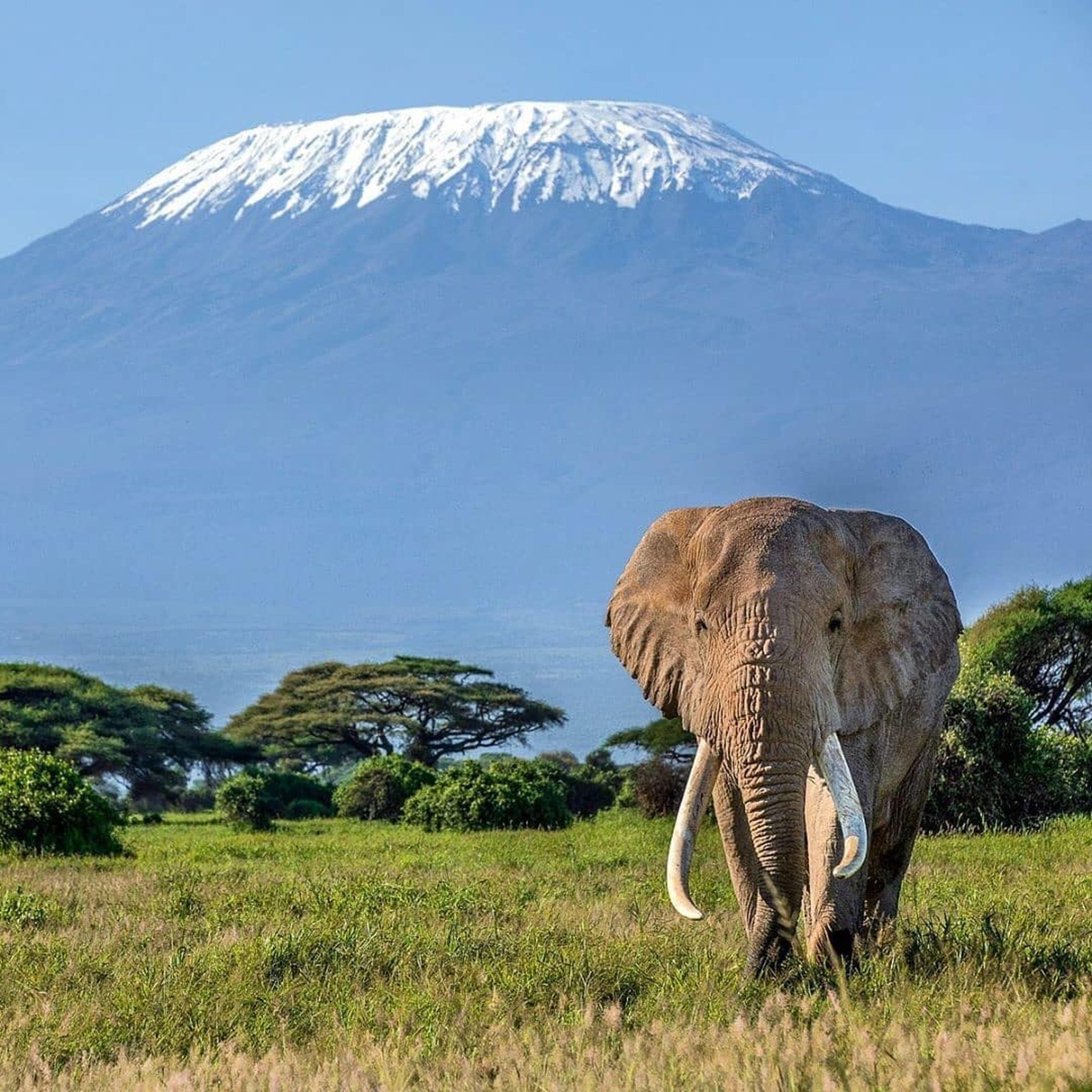 Jambo Safari Club huwelijksreis Afrika