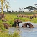 Big_jambo_safari_club_-_tanzania